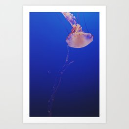 jellyfish ii Art Print
