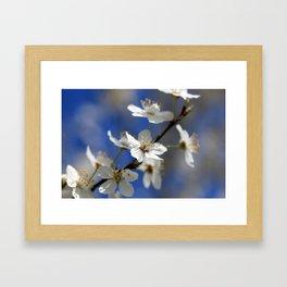 Weißdorn Framed Art Print