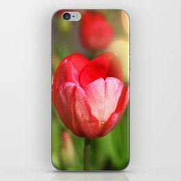 Tulip in the light of spring iPhone Skin