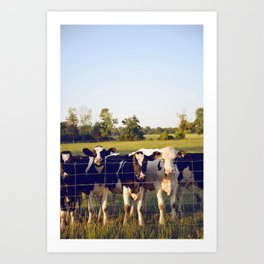 Cows In The Country III Art Print