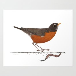 American Robin with Earthworm Art Print