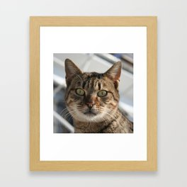 Beautiful Eyed Tabby Cat  Framed Art Print