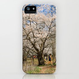 Cherry blossom-high park iPhone Case