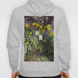 Yellow and White Daffodils Against a Rock Wall Hoody