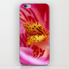 orchid PHALENOPSIS 2 iPhone & iPod Skin