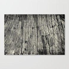 Aging Maple Log 2012 Canvas Print