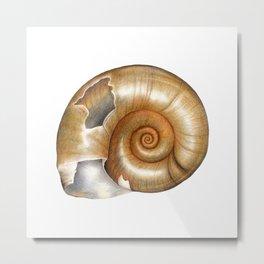 The Great Ramshorn (Planorbarius corneus) Metal Print