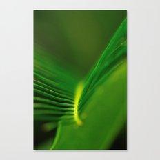 Fern Lines Canvas Print