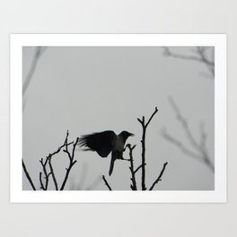 black wings Art Print