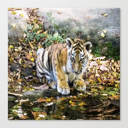 Autumn Tiger Cub Canvas Print