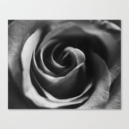 Rose in Shadow Canvas Print