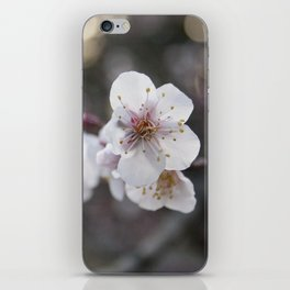 The Early Cherry Blossom iPhone Skin