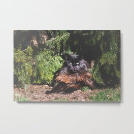 The king of the cats Metal Print