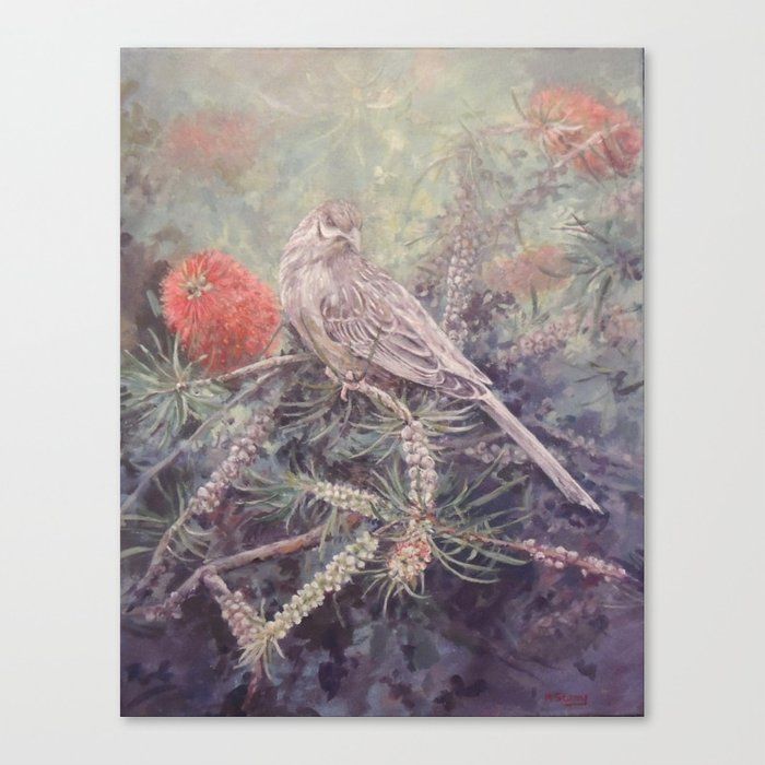 Red Wattle bird Canvas Print
