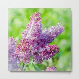 Sweet lilac Metal Print