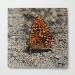 Butterfly Eyes Metal Print