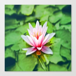 Pink Lotus Waterlily & Green Lily Pads Canvas Print