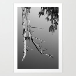 Upside Down Tree 1 Art Print