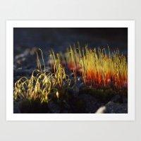 Tiny moss Art Print