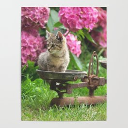 Little Tiger on the scales Poster