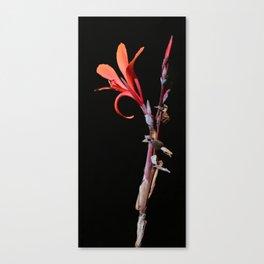 Canna Musifolia Canvas Print