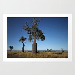 Queensland Australia Bottle Tree... the shape of a beer bottle Art Print