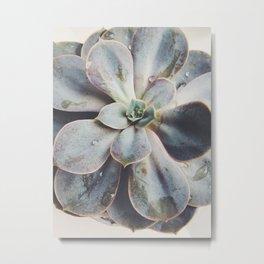 beauty succulent Metal Print