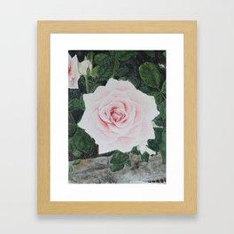Katie's Rose Framed Art Print