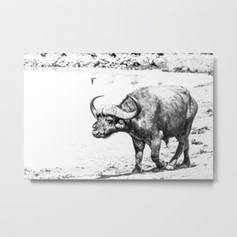 Cape Buffalo Metal Print