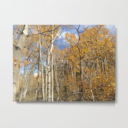Autumn Aspens Metal Print