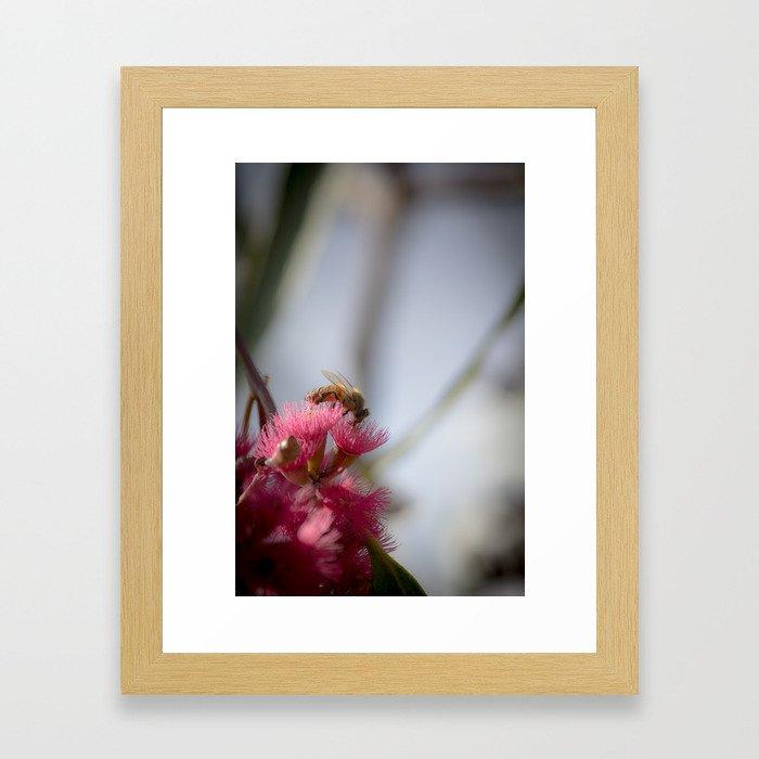 Bee on Red Wattle Tree Framed Art Print