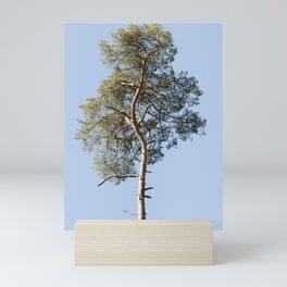 Coniferous Tree Series 3 of 3 Mini Art Print