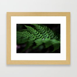 Fern #1 Framed Art Print