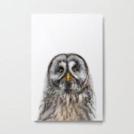 Owl Print Metal Print