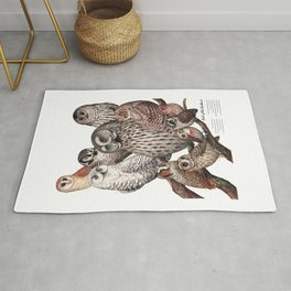 Owls of the Northeast Rug