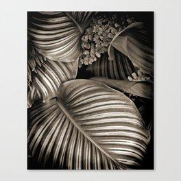 Striped Tropical Calathea Leaves Canvas Print