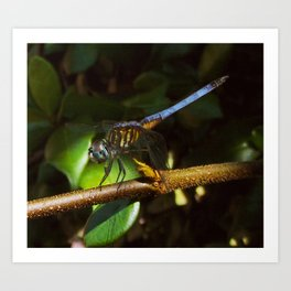 The neon blue dragonfly Art Print
