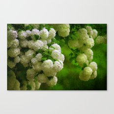 Flower Wall Canvas Print