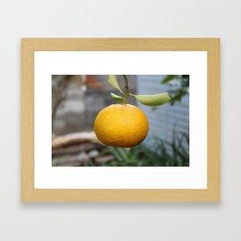 Garden Orange Framed Art Print