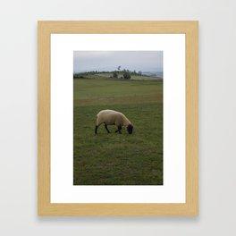 Sheep Grazing in Rural Japan Framed Art Print