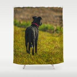 Watching dog Shower Curtain
