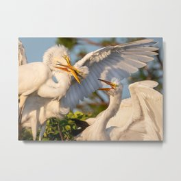 Great Egret Brawl Metal Print