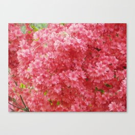 Pink Flowers Canvas Print
