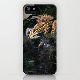 Common frog under sunlight on surface of water in marshes iPhone Case