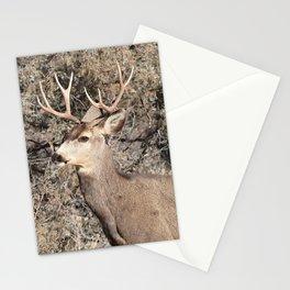 Watercolor Deer, Mule 12, Crestone, Colorado, Statuesque Stationery Cards