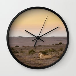Single lioness relaxes while African sun sets Wall Clock