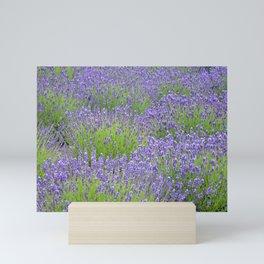 Purple lavender garden Mini Art Print