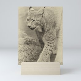 beautiful lynx Mini Art Print