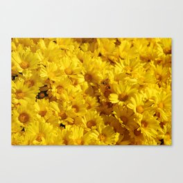 Bees in a Sea of Mums Canvas Print