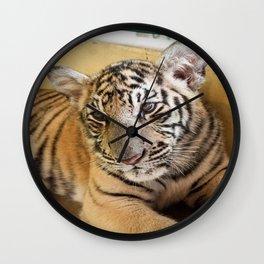 Tiger, Small Indo-China  Wall Clock